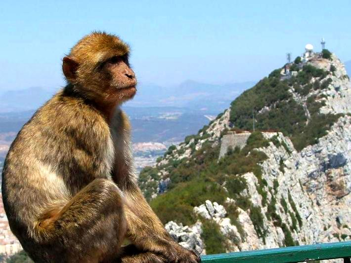 6-gibraltar-monkeys-day-trip-malagatrips