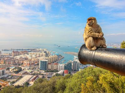 16-gibraltar-monkeys-visit-from-malaga