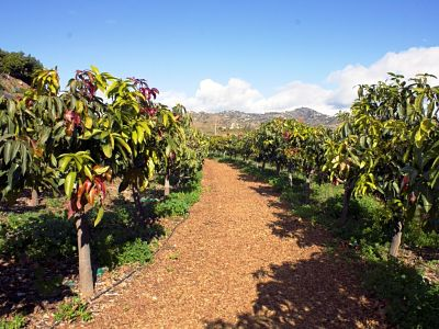 6-semo-private-tour-axarquia-mango
