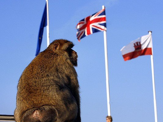2-Gibraltar-Monkey-day-trip